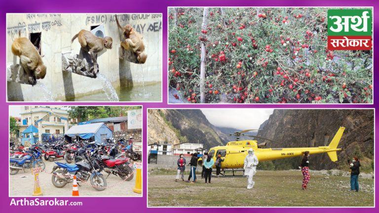 देश बोल्ने फोटो कथा : दाङमा बोटमै गोलभेडा कुहिन थालेपछि किसान चिन्तित, संक्रमितको हेलिकप्टरबाट उद्दार गरिँदै