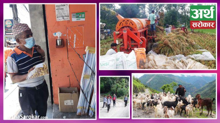 देश बोल्ने फोटो कथा : चैते धान थ्रेसिङ गर्दै कञ्चनपुरको बेलौरीका किसान, भुटेको चनाको व्यापार गर्दै पोखराका व्यापारी