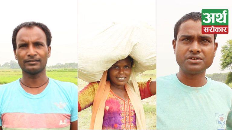बाँकेमा एक सातादेखि पानी नपर्दा धान रोपाईं रोकियो, सिचाई गर्दा प्रतिघन्टा ५ सय रुपैयाँ खर्च व्यहोर्दै किसान (भिडियो)