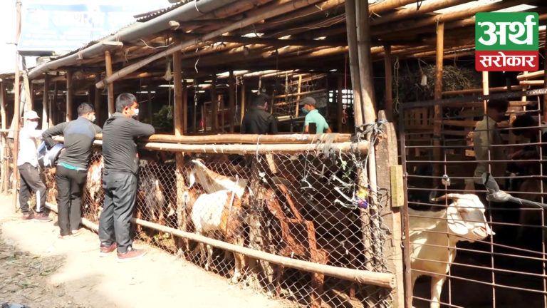 काठमाडौंमा खसीबोका मूल्य आकाशियो, उपभोक्ताहरुले यस्तो गुनासो (भिडियो रिपोर्ट)